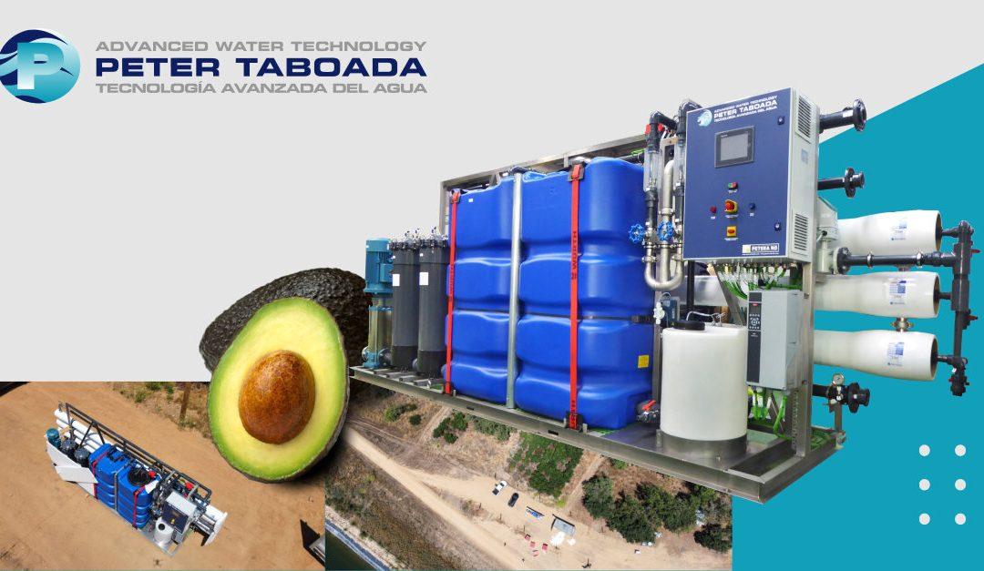 Peter taboada avocado irrigation plant